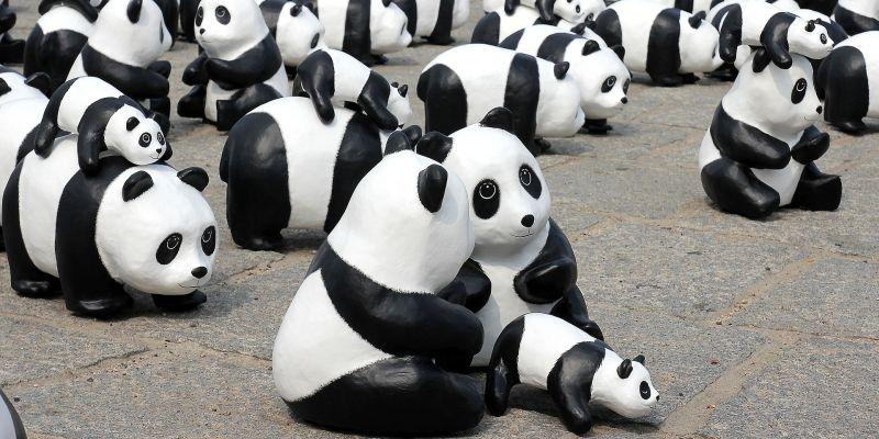 Panda algorytm wyszukiwarki Google