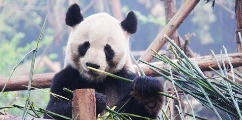 Google Panda algorytm